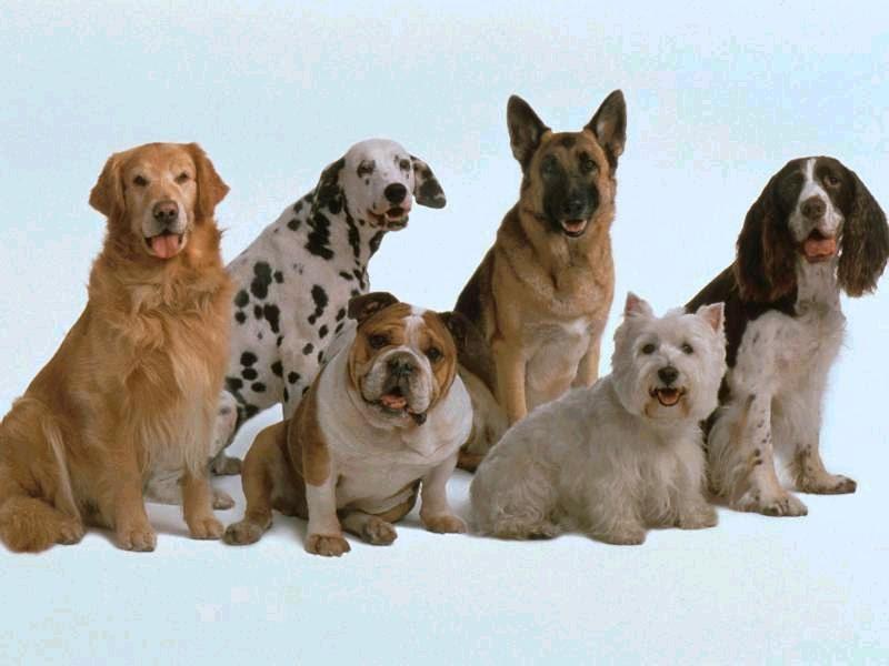 Город Волос запускает движение по чипизации домашних животных.