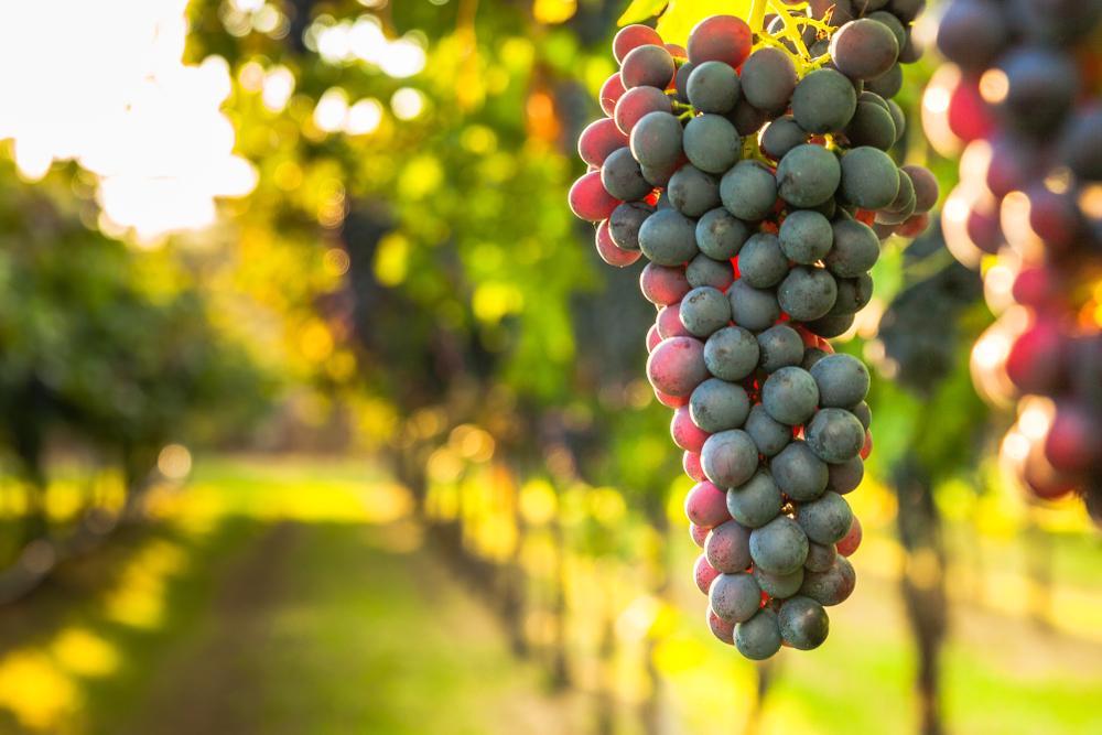 TOP 5 Greek wines