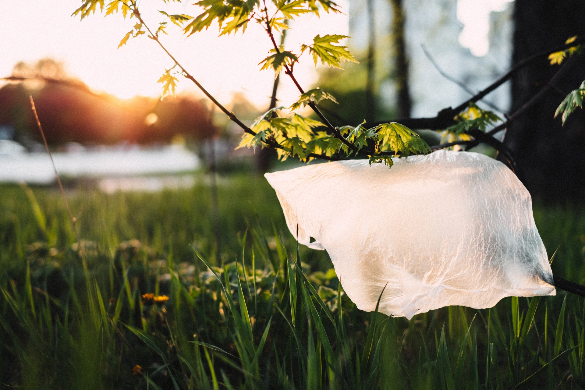 В Греции стали использовать на 85% меньше пластиковых пакетов