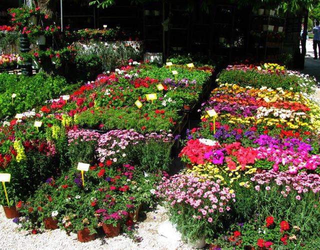 Цветочная выставка в Афинах.