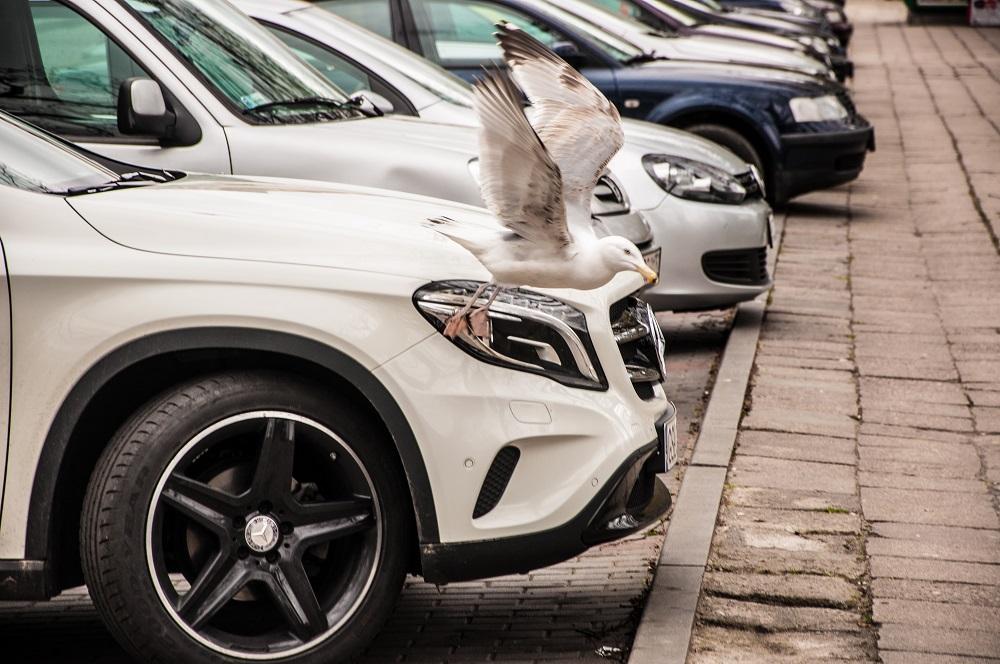 У Лімассолі відбудеться свято для автомобілістів