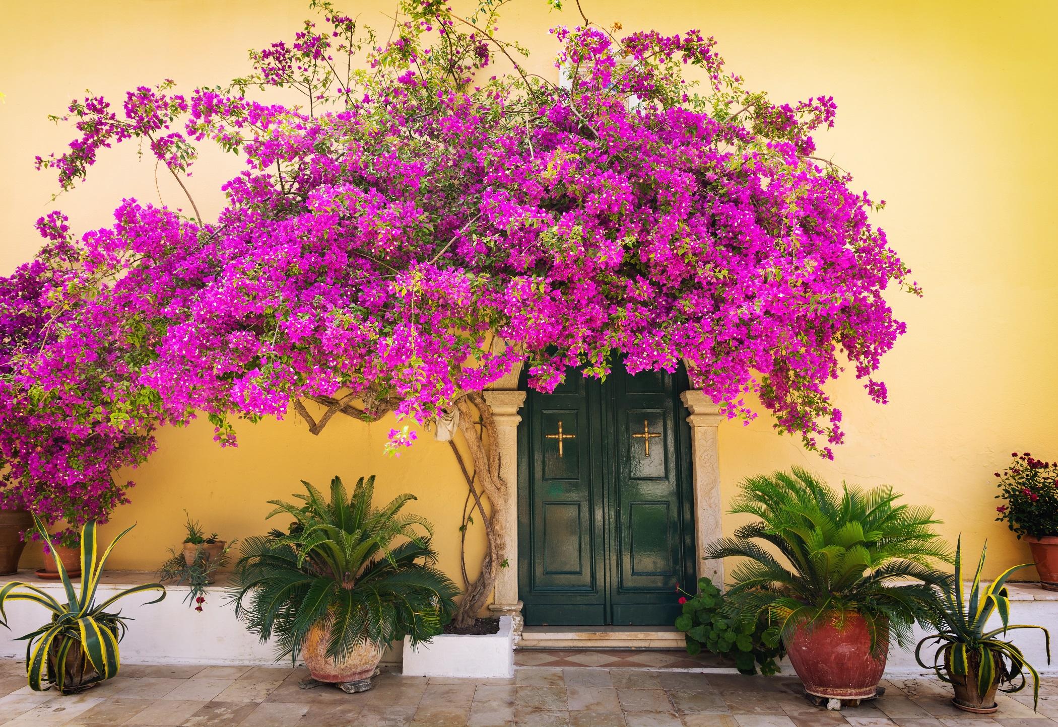 Греческая флора