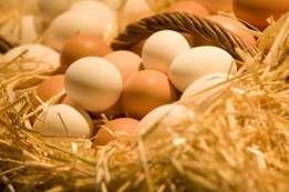 В Греции зараженных фипронилом яиц - нет.