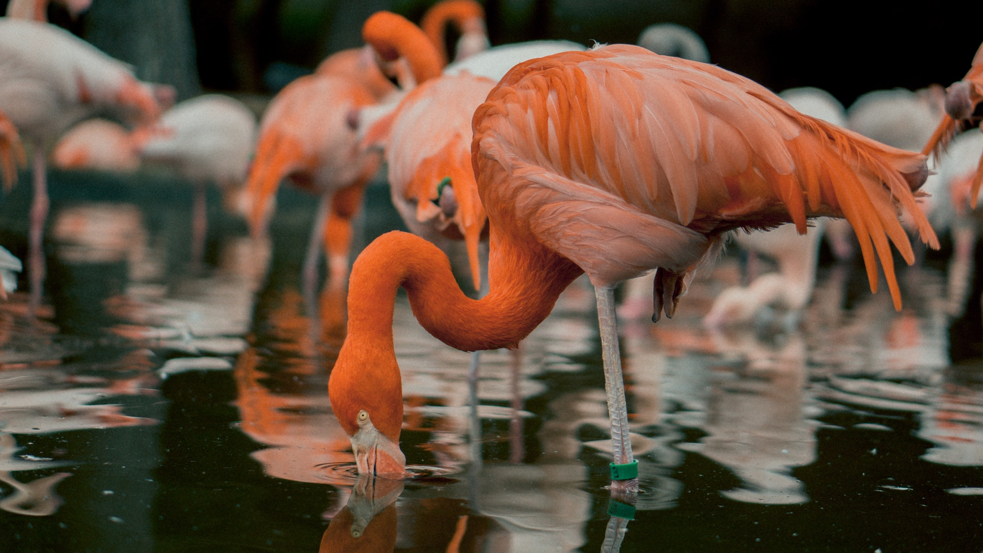 Flamingo season in Cyprus