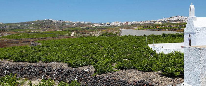 Η Σαντορίνη στους 15 καλύτερους δρόμους του κρασιού του κόσμου