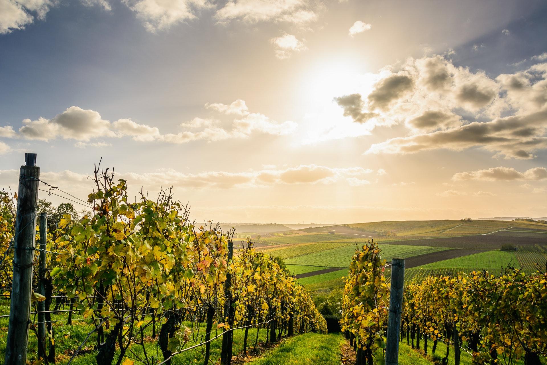 Винодельческая отрасль в Греции вышла на новый уровень