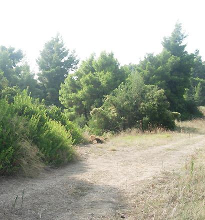 Земельный участок 12875 m² на Кассандре (Халкидики)